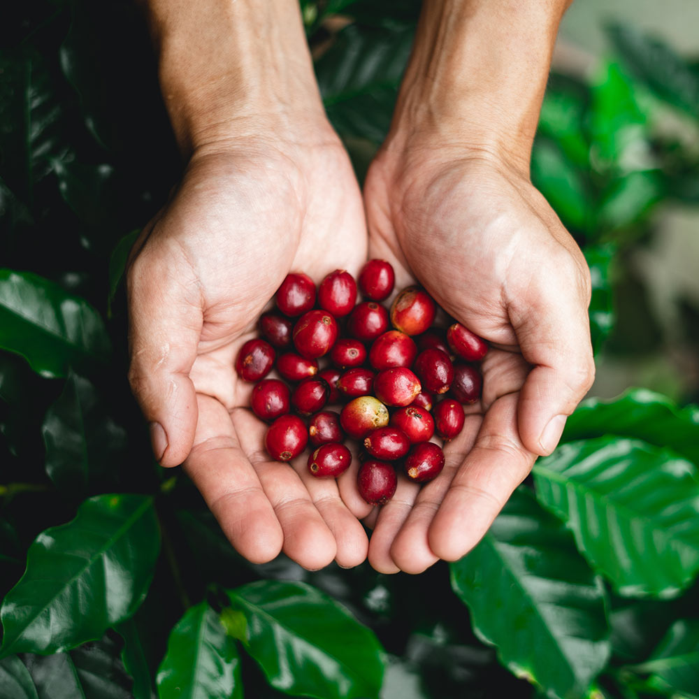 Craft or Specialty Coffee: Is there any difference?